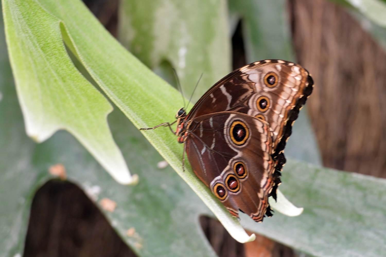 jardin-aux-papillons-morbihan-bretagne-sud-18 © Michel RENAC