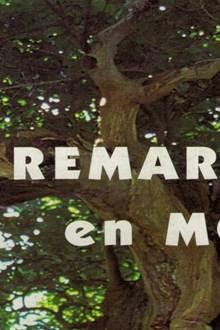 Exposition Les arbres remarquables du Morbihan