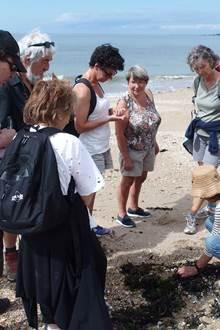 Balade nature - Un pas sur la dune