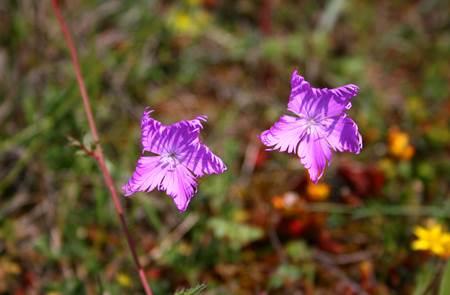Balade nature : Orchidée et flore printanière
