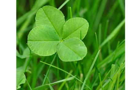 Journée de la chance