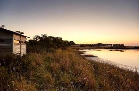 Balade nature : Les oiseaux d'eau du golfe du Morbihan