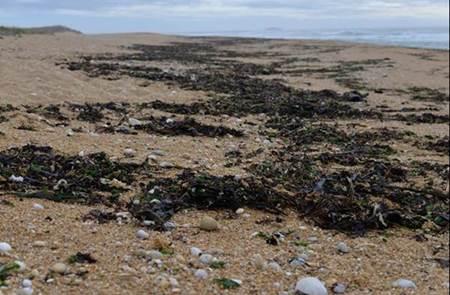 Découverte de l'Estran et des algues - St Pierre Q