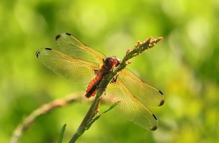 Sortie découverte des libellules